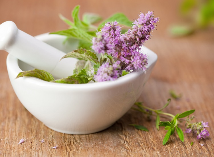 You Can Use Herbs While Medicines for Your Best Health